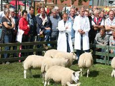 Akkoord over zwoegervrijconflict schapenfokdagen