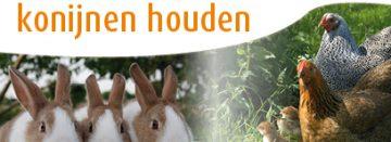 Workshops kippen en konijnen houden