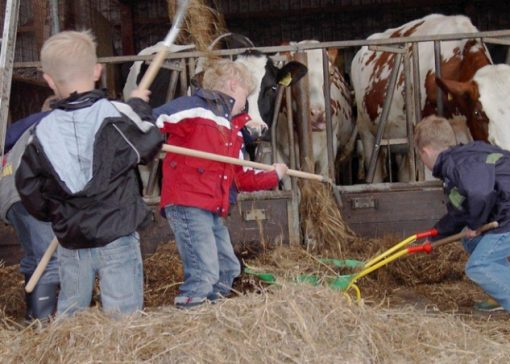 Boerderijkinderen gezonder dan stadskinderen