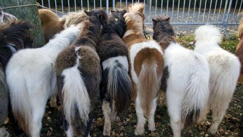 Paardenmarkt Hengelo (Gld.) stopt