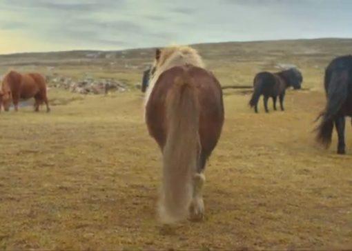 FILMPJE: Moonwalkende shetlander