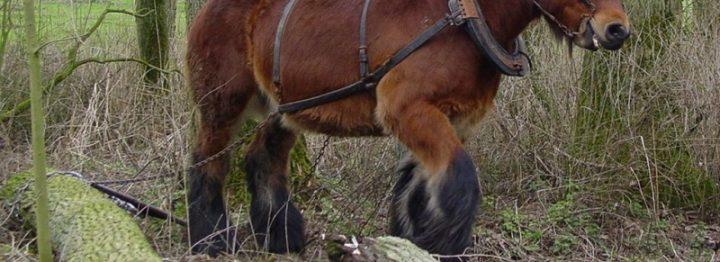 Wallonië stimuleert gebruik trekpaarden