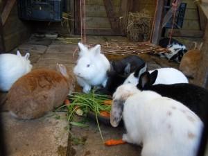 Snuffelaward voor Amsterdamse kinderboerderij 'De Dierencapel'