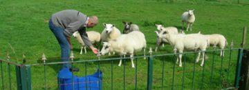 Hobbyboeren van groot belang voor platteland