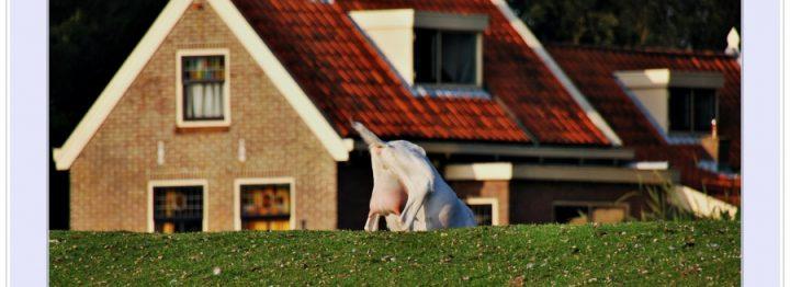 Dijksma: geen GLB-gelden naar niet-agrariërs