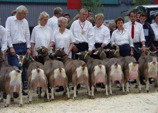 Soepeler veterinaire eis bij deelnemen aan keuring schapen en geiten