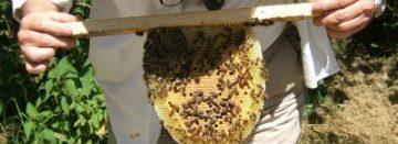 Honing voor wondbehandeling