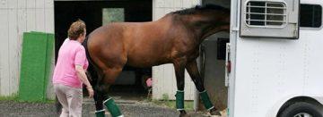 Europees handboek voor transport paarden