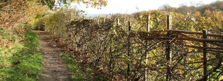 Subsidie agrarisch natuurbeheer vanaf 2014 via collectief