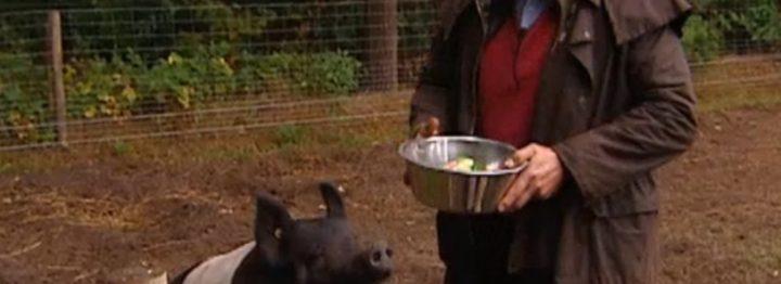 FILMPJE: varkensfluisteraar aan de slag met ammoniakprobleem