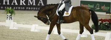 Rollkür niet per se slecht voor welzijn paard