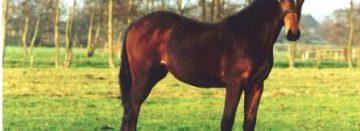 BTW-tarief jonge paarden omhoog