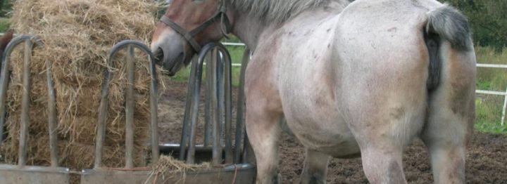 Trekpaardenvereniging blijft 'koninklijk'