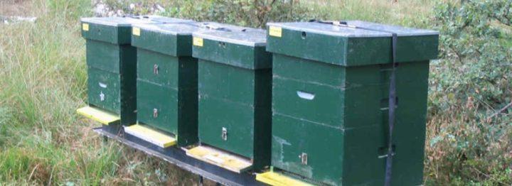 Burgers in actie voor bijen