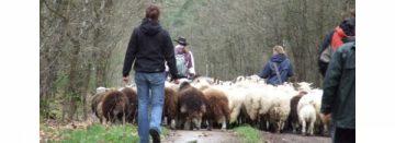 Nog enkele plaatsen vrij bij opleiding schaapherder