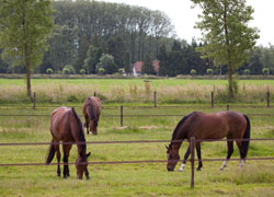 Paarden dood door ijzervergiftiging