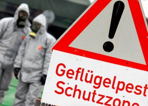 Vogelgriep op drie bedrijven in Duitsland