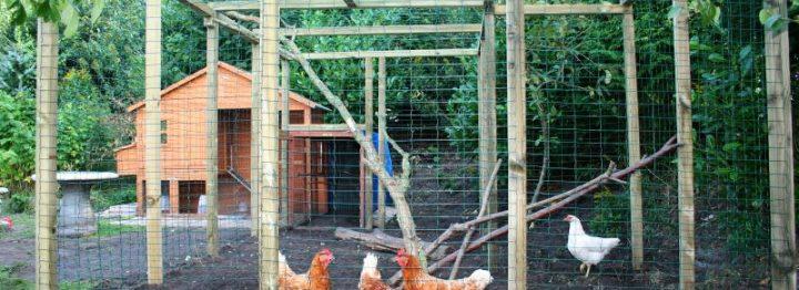 Europese commissie hernieuwt regels vogelgriep