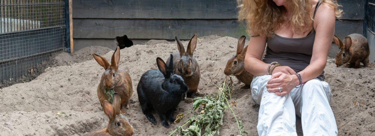 Alles in het teken van het welzijn van het konijn