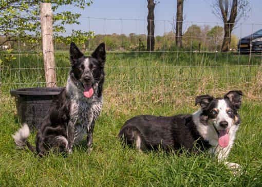 Trainingscentrum voor honden én bazen