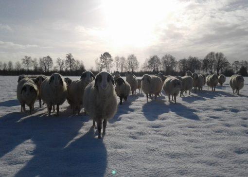 Boerenvee, het vakblad voor liefhebbers van boerderijdieren