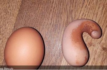 Kip legt bijzonder gek ei