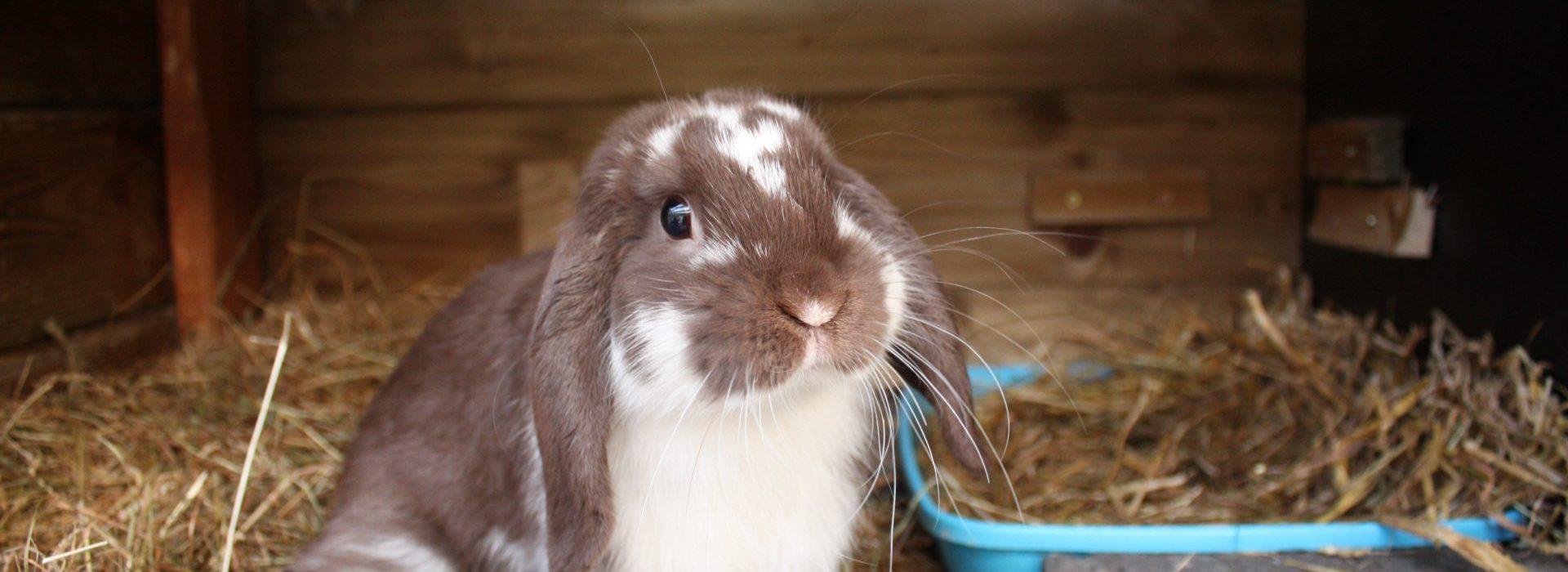 Hoe ziet een gezond en verantwoord konijnenmenu eruit?