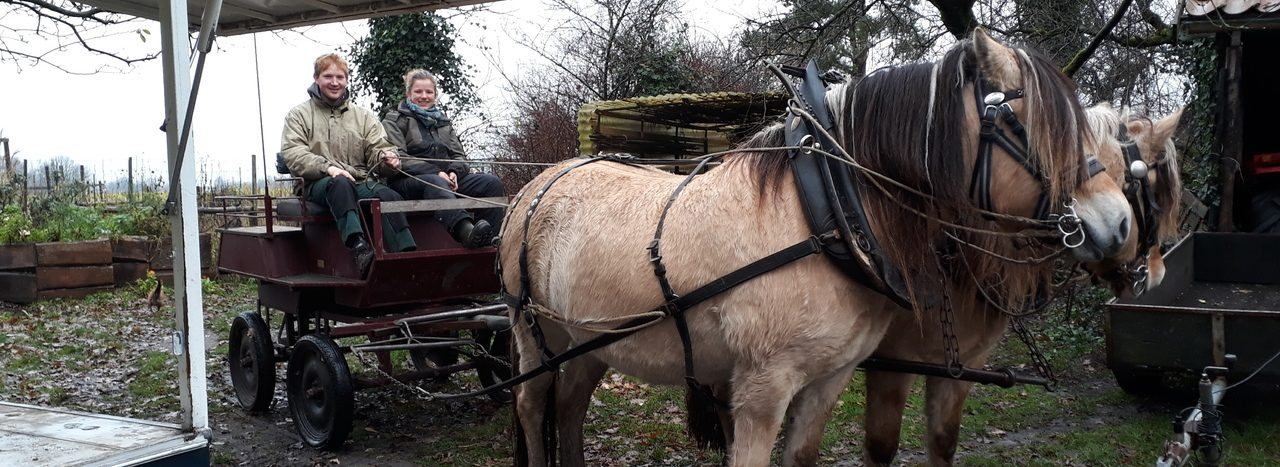 Boer Sil verkiest échte paardenkrachten