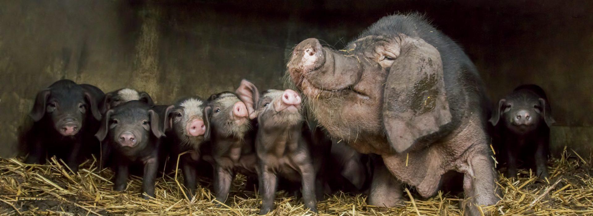Door de lens van vee-fotograaf Gert van den Bosch
