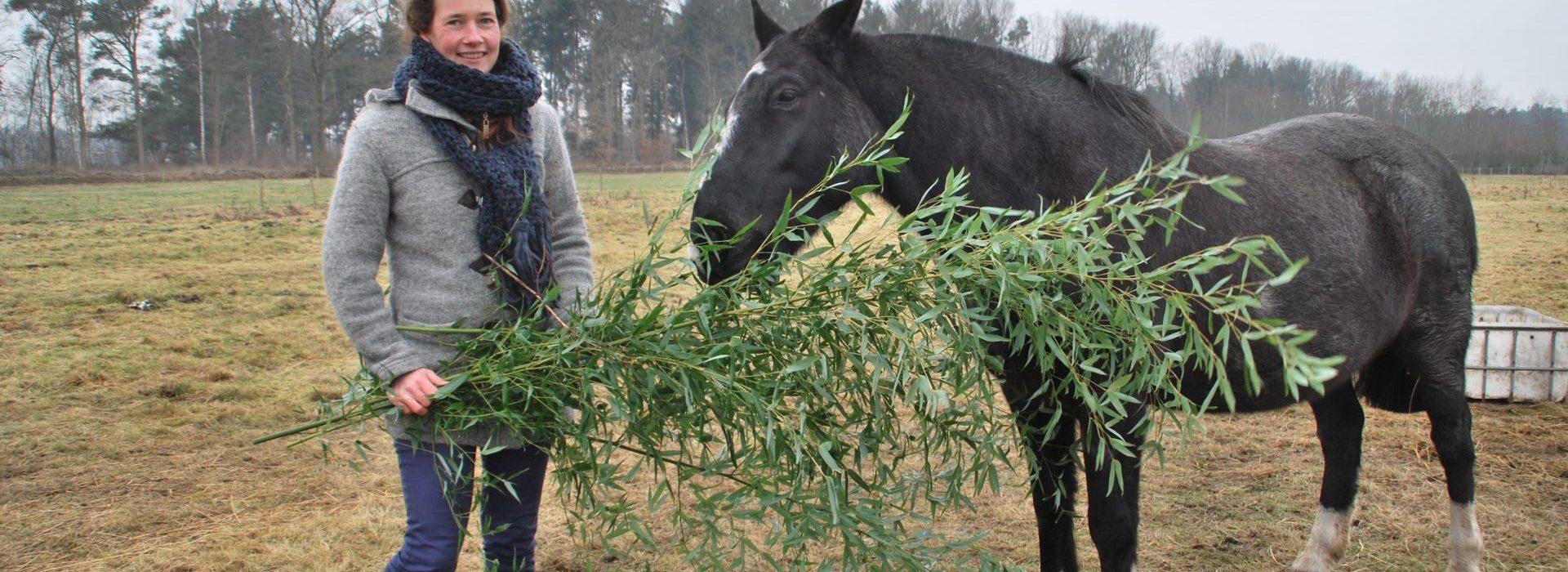 Paardenwelzijn verbeteren door de omgeving te verbeteren