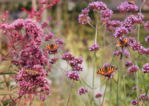 Draag bij aan het behoud van de bij (en andere insecten)!
