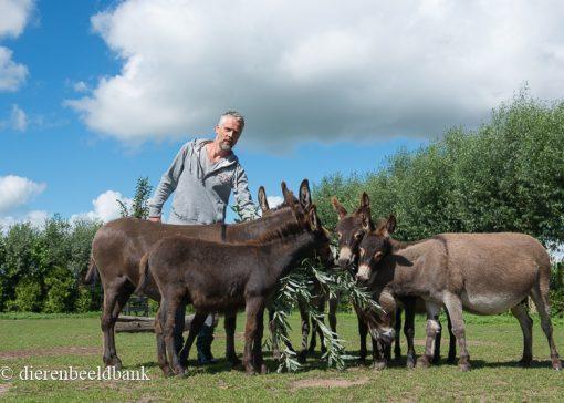 Mini-ezelstal Hero's. Hobbyfokkers met een mini-ezel verslaving