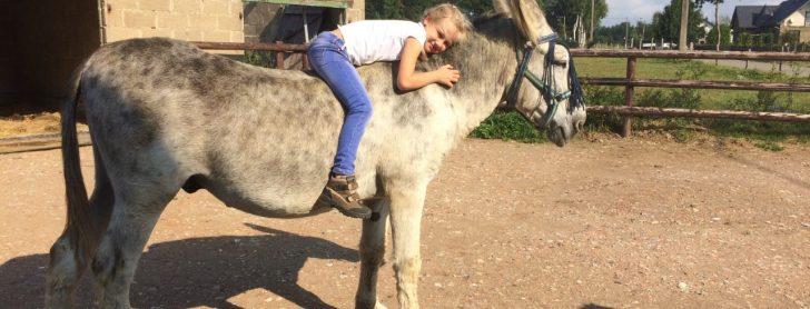 Het beste van papa-ezel en mama-paard