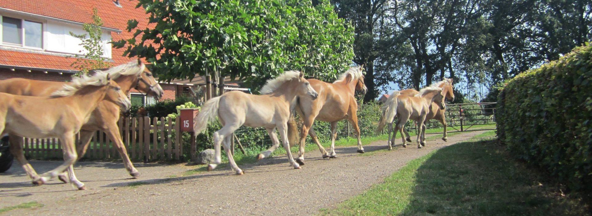 De zuiverende werking van paardenmelk