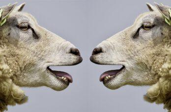 Meer dierennieuws? Lees onze Dier & Mail