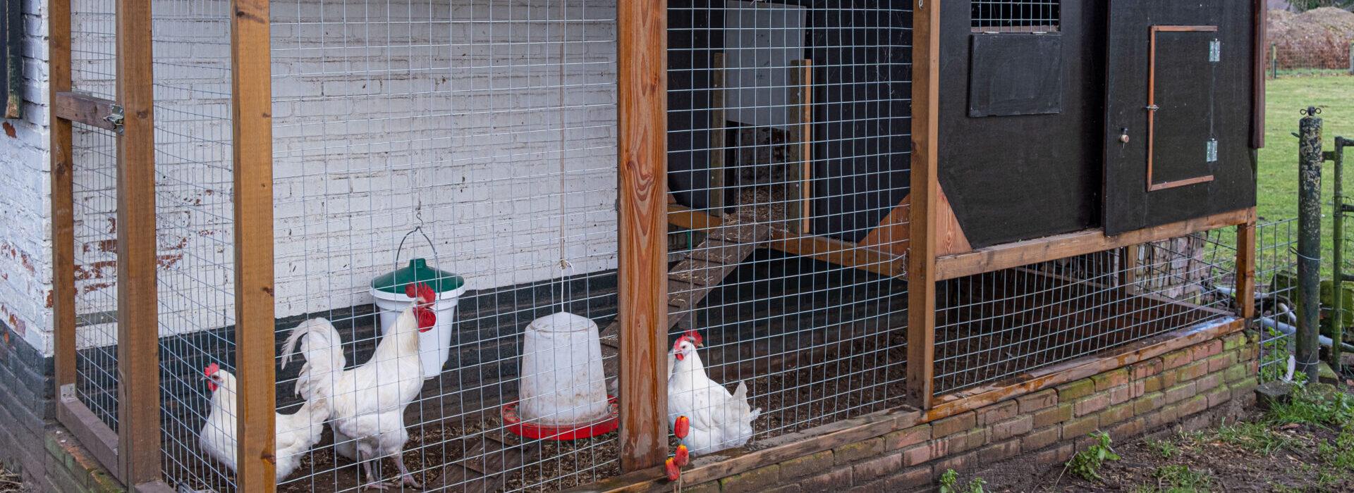 Een kippenhok voor elke tuin (deel 1)